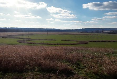 Among the Mounds, Part 3: the Hopeton Earthworks